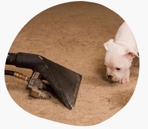 End Of Lease Carpet Cleaning Brunswick